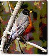 Rockin' Robin Acrylic Print