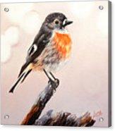 Rockin Robin  Acrylic Print