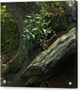 Rocks And Rhododendron At Chimney Rock Acrylic Print