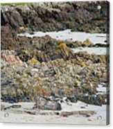 Rocky And Sandy Beach Acrylic Print