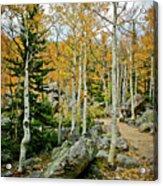 Rocky Mountain Aspens Acrylic Print
