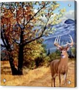 Rocky Mountain Trail Acrylic Print