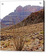 Rocky Slope Grand Canyon Acrylic Print