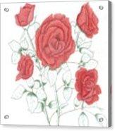 Rojo Cinco Acrylic Print