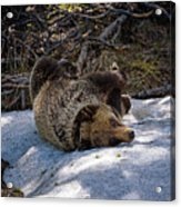 Roll In The Snow Acrylic Print