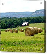 Rolled Bales Acrylic Print