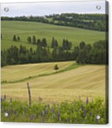 Rolling Farmland Stretches Acrylic Print