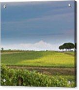 Rolling Tuscany 2 Acrylic Print by Patrick English