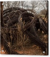 Rolls Of Barbed Wire Acrylic Print