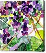 Roman Grapes Acrylic Print