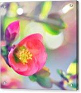 Romancing Spring I Acrylic Print