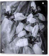 Romantic Island Iris In Black And White Acrylic Print