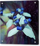 Romantic Island Lilies In Blues Acrylic Print