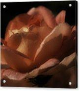 Romantic September Rose Acrylic Print