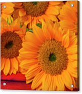 Romantic Sunflowers Acrylic Print