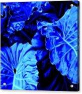 Romney Blue Acrylic Print