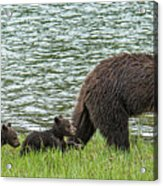 Romping By The Lake With Mama Bear Acrylic Print