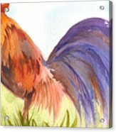 Rooster 2 Acrylic Print