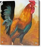 Rooster 4 Acrylic Print