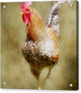 Rooster Jr. Acrylic Print