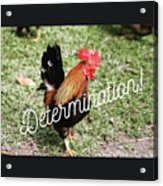 Rooster Living Acrylic Print