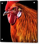 Rooster Pride Acrylic Print