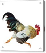 Rooster Running Acrylic Print