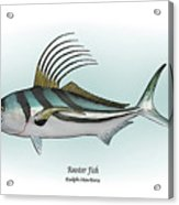 Roosterfish Acrylic Print