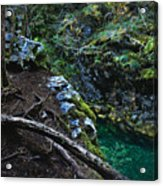 Rooted In Emerald  Acrylic Print