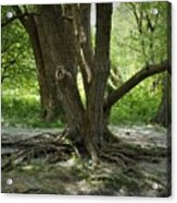 Roots Above Acrylic Print