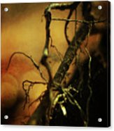 Roots Of Life Acrylic Print