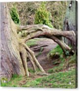Roots Of Strength Acrylic Print
