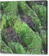 Roots Of The Ages Acrylic Print