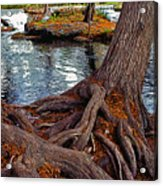 Roots On The River Acrylic Print