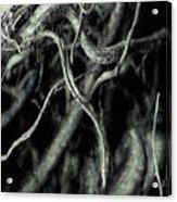 Roots Series #1 Acrylic Print