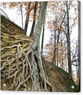 Roots  Acrylic Print by Steve Shockley