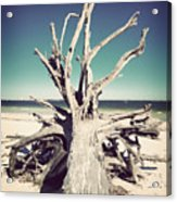 Roots To The Sky-vintage Acrylic Print by Chris Andruskiewicz