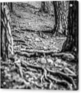 Rootway 2012 - Black Edition Acrylic Print