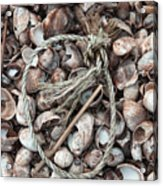 Rope In Shells Acrylic Print