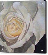 Rosa Acrylic Print