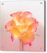 Rosalie Acrylic Print