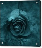 Rose - Green Acrylic Print