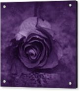 Rose - Purple Acrylic Print