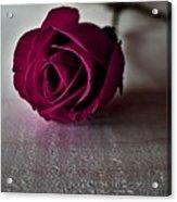Rose #003 Acrylic Print