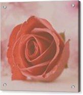 Rose #004 Acrylic Print