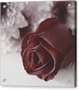 Rose #006 Acrylic Print