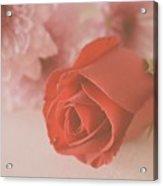 Rose #007 Acrylic Print