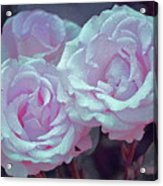 Rose 118 Acrylic Print by Pamela Cooper