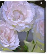 Rose 120 Acrylic Print by Pamela Cooper