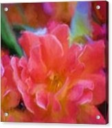 Rose 337 Acrylic Print